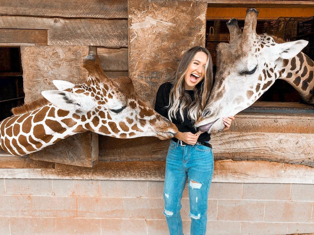 Giraffes at Zootastic Park