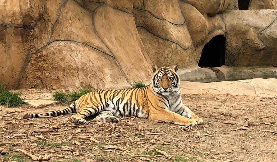 Zootastic Park Visit Mooresville NC