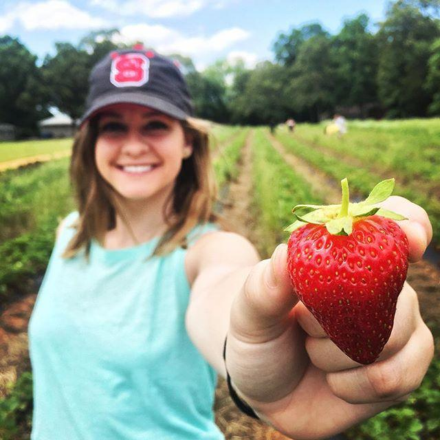 Carrigan Farms strawberries Mooresville NC