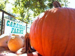Pumpkin Picking at Carrigan Farms @ Carrigan Farms
