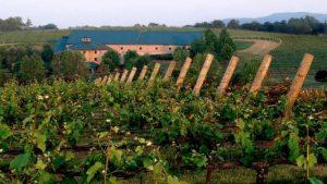 NC Vintage Vineyard Tour @ The Barrel Wine Bar